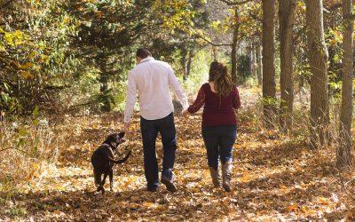 Mangler I en hund i familien?